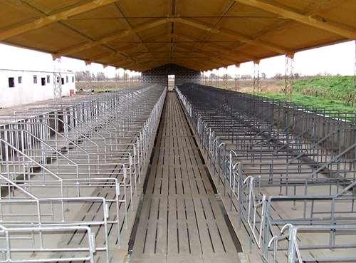 Galpones/ Tinglados / Techos Criaderos Cerdos