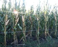 7500 H En Alquiler 100% Agricolas Para 2017 Bs As Y L Pampa