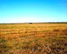 Campo Agrícola – 200 Has. - Ref. Ca0001: