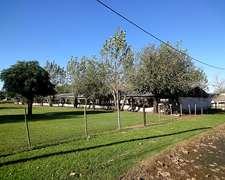 Granja De Pollos Habilitada, San Pedro
