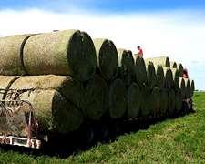 Rollos De Alfalfa De Primera Calidad