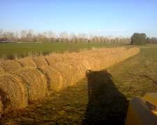 Rollos Grandes De Pasturas Natural Recien Hechos