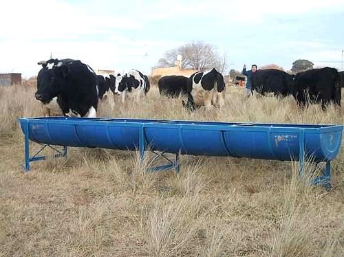 Comederos para vacunos o feed lot o bebederos agroads for Vacas decorativas para jardin