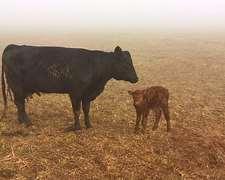 Hoteleria Vacas De Cria Consulte