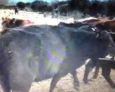 Tomo Vacas A Capitalizar