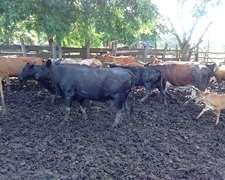 Vacas Preñadas 1 2 3 4 5 6 Paricion Mezcladas Gordas