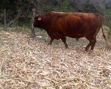 Vendo Toro En Cordoba