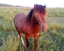 Pony Potros Potrillos Caballos