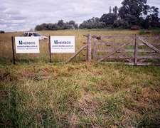Cabaña Hampshire Down - Venta De Reproductores .