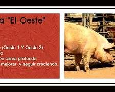 Cabaña El Oeste Cerdos Alcira Gigena Córdoba.