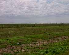 Vendo 1000 Ha Campo Mixto En Santiago Del Estero .