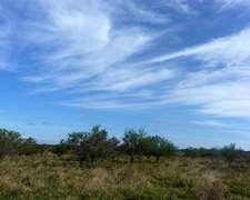 128 Has. Para Forestar – Depto. Federación – Ref. Cf0038