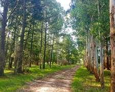 180 Has Campo Ganadero Con Costa De Río En Baradero