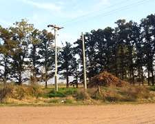 4800 M2 En Paraje Forastieri - Roque Perez