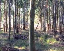 50has Forestales - Concordia - Entre Rios