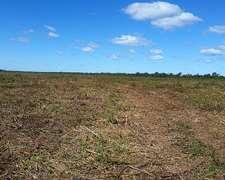 Campo Agrícola-ganadero, 400 Ha Desmontadas