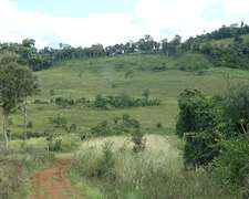 Campo En Misiones ( Ganaderia , Forestacion , Llervatero )