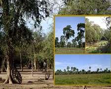Campo Ganadero Y Forestal En Venta En Las Lomitas, Formosa