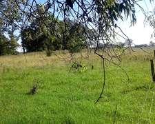 Campo Mixto En Nueve De Julio