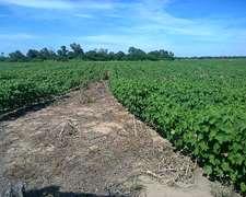 Chaco. Tres Isletas, 200 Has Agricolas