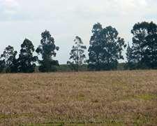 Campo Agrícola – 600 Has. – Ref. Ca0012: