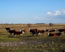 Estancia En Venta Tranquera Cerrada Empedrado Corrientes