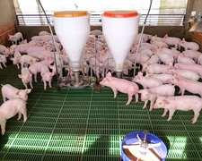 10ha Bolivar-criadero De Cerdos