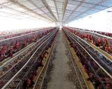 3 Ha Berazategui-granja Ponedoras-planta De Alimento
