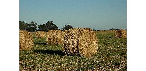Venta De Rollos Pasto/pastura Desde $700