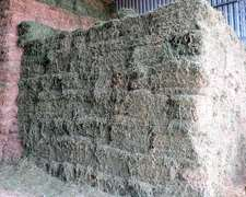 Venta De Fardos De Alfalfa
