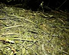 Megafardos De Alfalfa Excelente Calidad