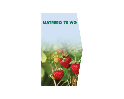 MATRERO 70 WG