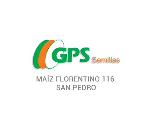 MAÍZ FLORENTINO 116 - SAN PEDRO