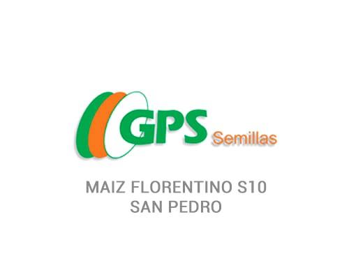 MAIZ FLORENTINO S10 - SAN PEDRO