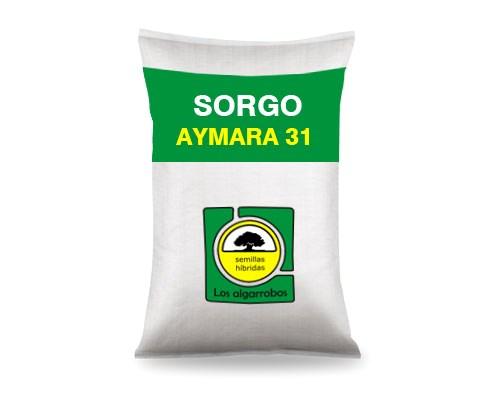 AYMARA 31