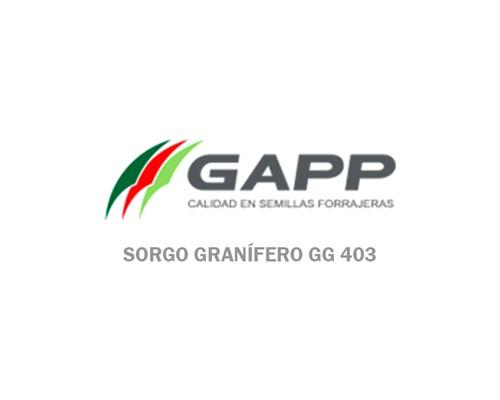Sorgo Granífero GG 403